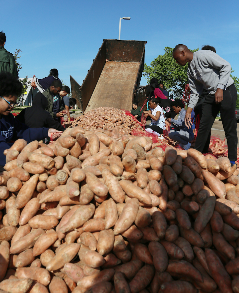"""Senior DreQuan Cooley, right, helps gather bags of potatoes for the public. """"This is more than just receiving mandatory community service hours because I completed that requirement in my junior year. All that I do now is about giving back to the community."""" (Photo by Charles A. Smith/JSU)"""