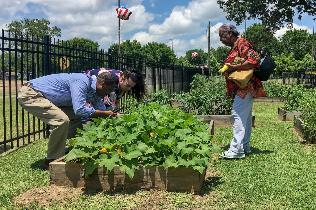 A patron observes as JSU husband-and-wife staffers Rod Denne and Heather Wilcox, director of the Center for University-Based Development, take a closeup of items in the garden. (Photo by Charles A. Smith/JSU)